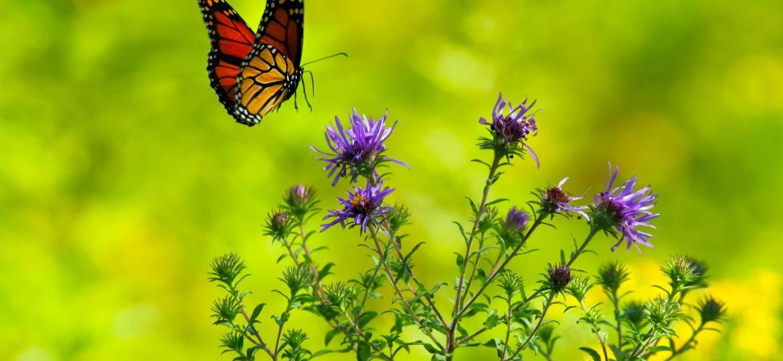 butterfly-1990204